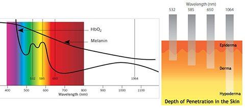 conbio spectrum chart